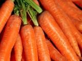 Homemade Baby Food:Carrots