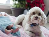 Preparing Your Dog to Meet Your Baby